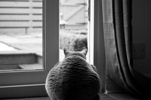 undecided_cat_spare_consultacy